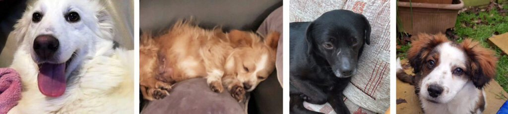 Thank you from Romanian rescued animals