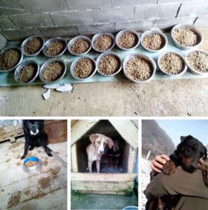 bosnia's rescue dogs