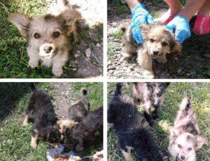 Puppy rescued in bosnia