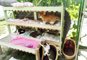 rescue cats' bunk bed
