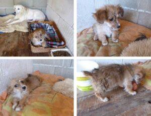 Rescued puppy in romania