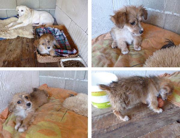 Puppy rescued in Romania
