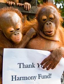 Thank you Harmony Fund!