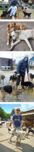 Ukraine rescue dogs