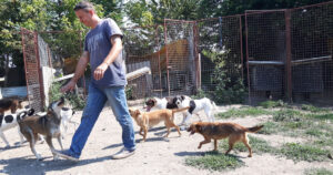 Sasha Pesic's free-running dog sanctuary in Serbia