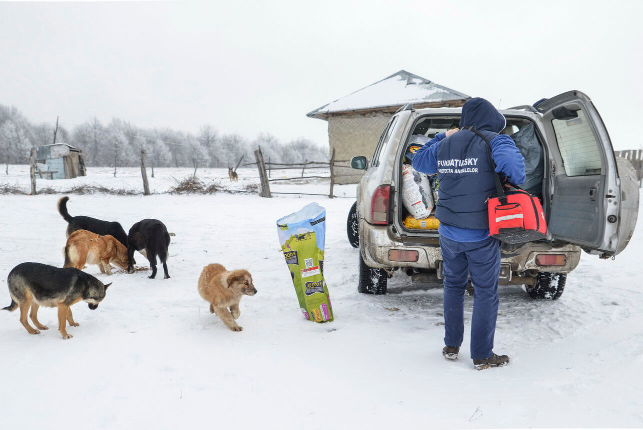 Feeding dogs in the snow