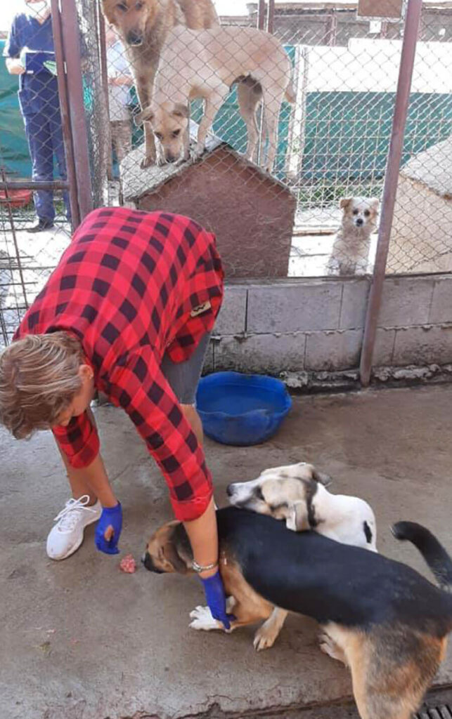 Claudia caring for rescue dogs