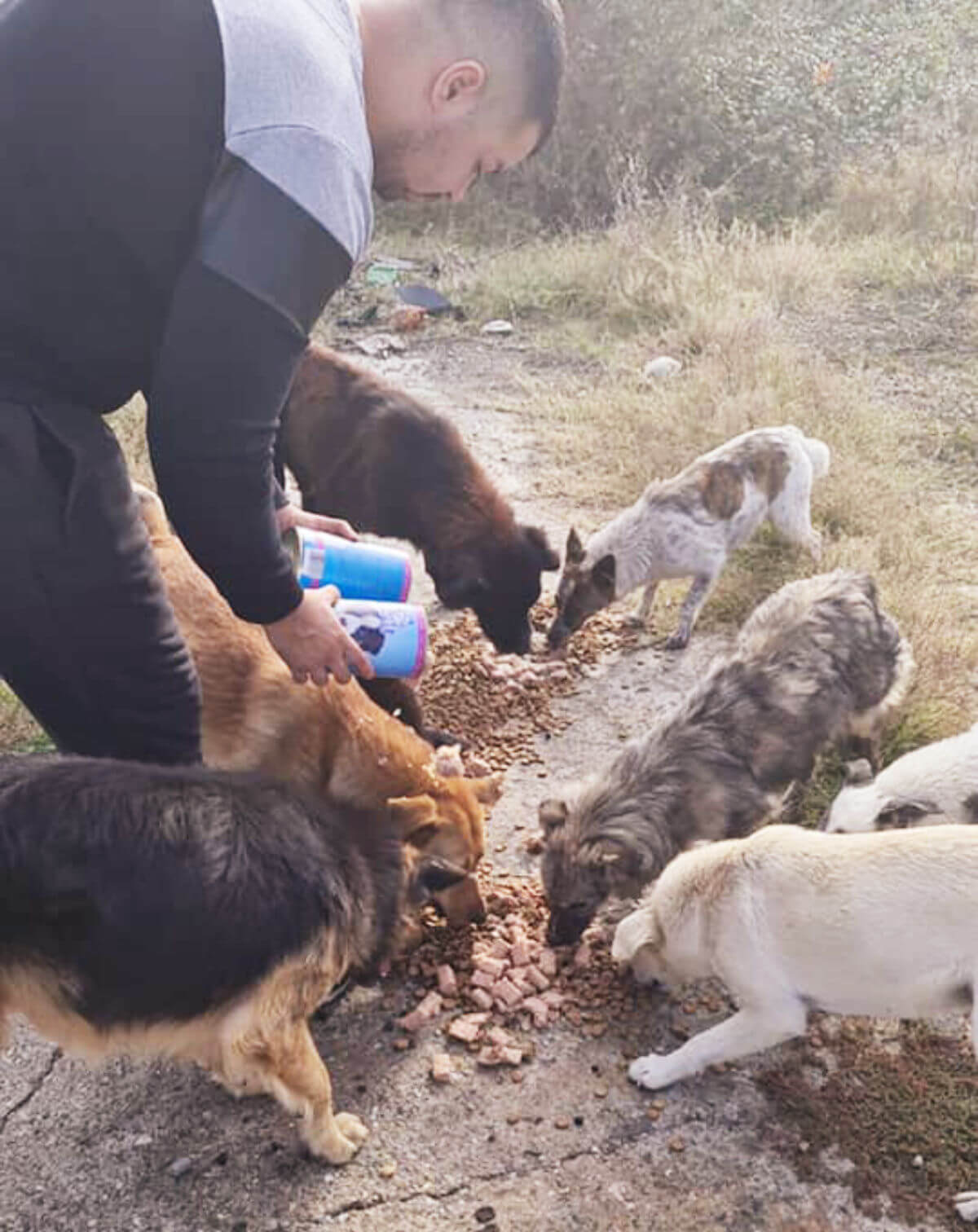 Feeding dogs in the field
