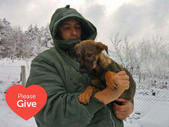 Winter snow, rescuer holding rescue puppy in Bosnia