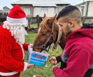 Santa giving gift to rescued horse