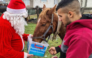 Crusade of Compassion for Homeless Animals in Romania