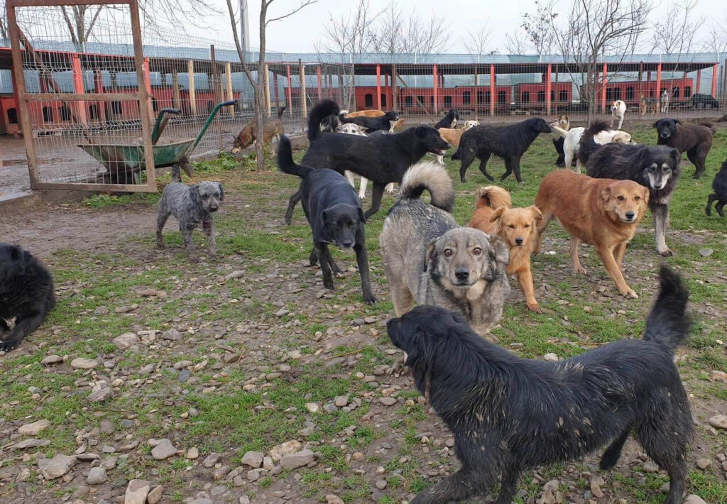 many rescued dogs in the rescue center