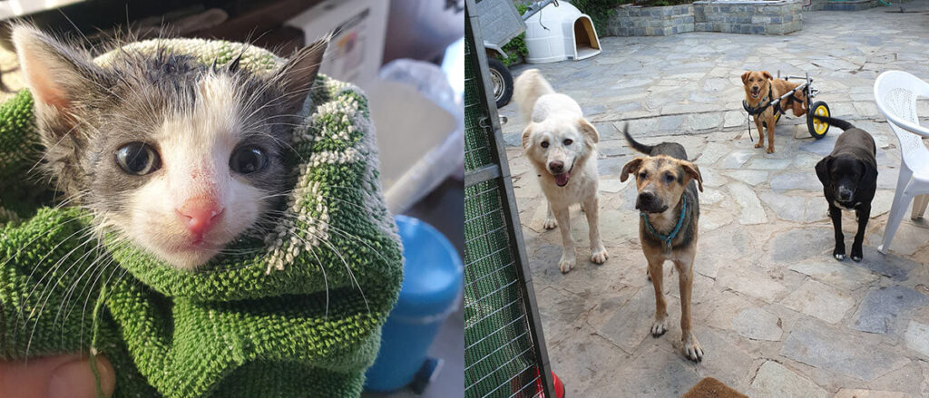 Rescued kitten and dogs of Tea Cup Rescue