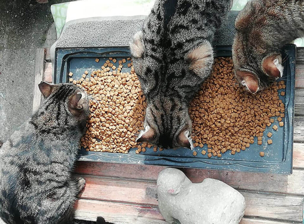 Feeding the street cats in turkey
