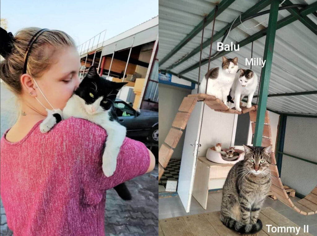 Rescued cats, Balu, Milly and Tommy II