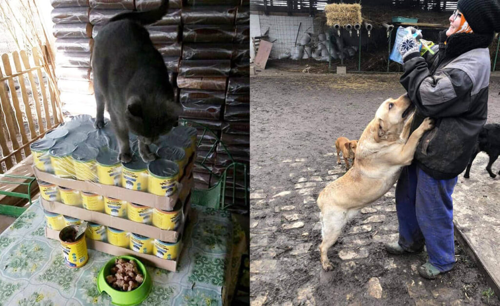 Donated food and rescued dogs and cats