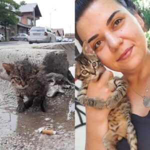 Rescuer Edina and her rescued kitten