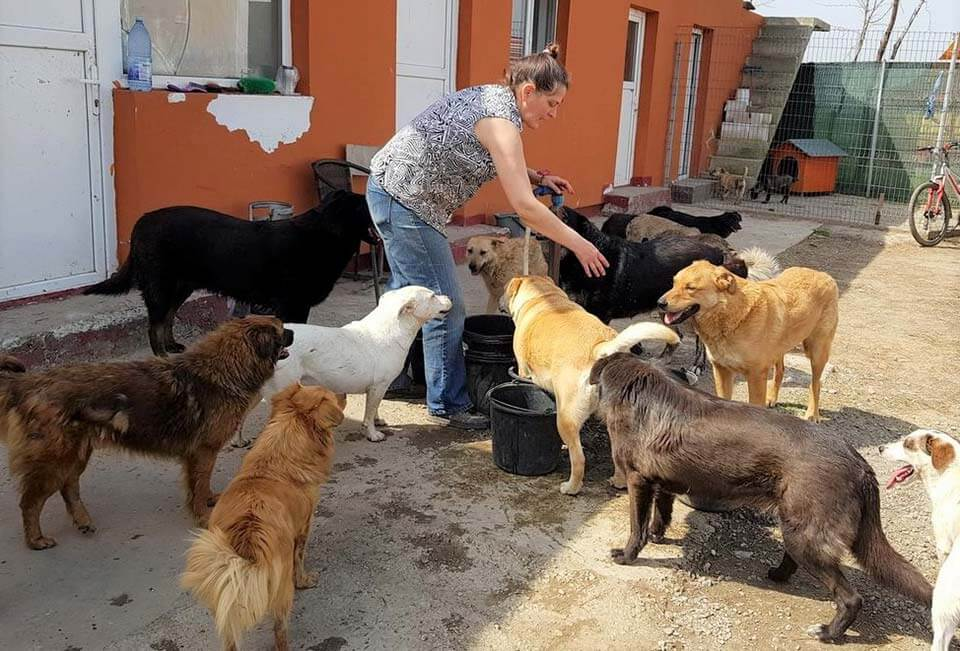 Romanian rescue dogs being cared for