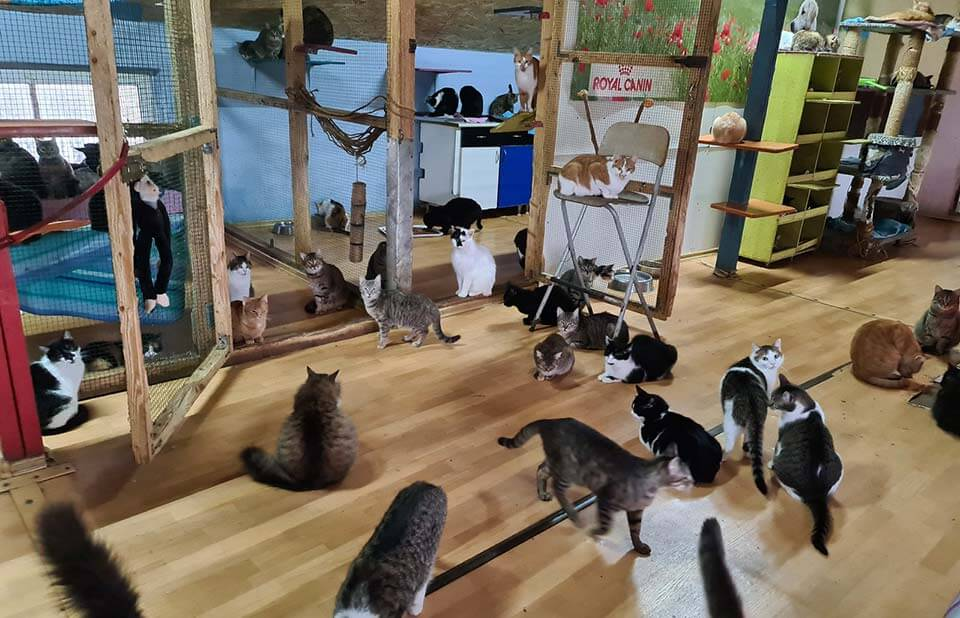 Romanian rescued cats in the cats room