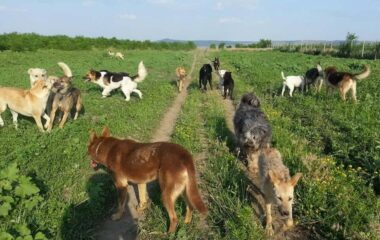 Food Drive For Romanian Animals