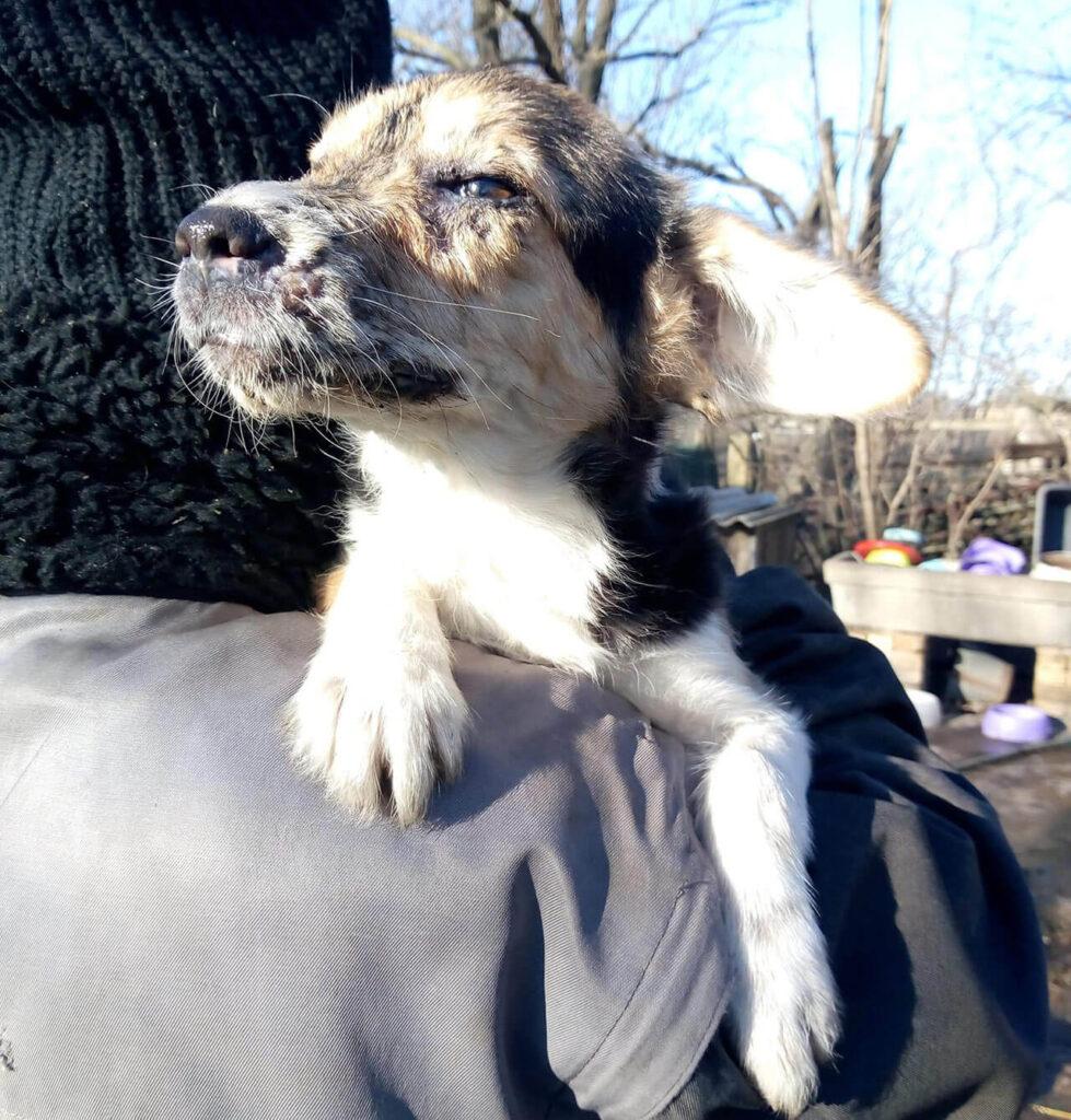 Rescued puppy on rescuer's shoulder, safe.