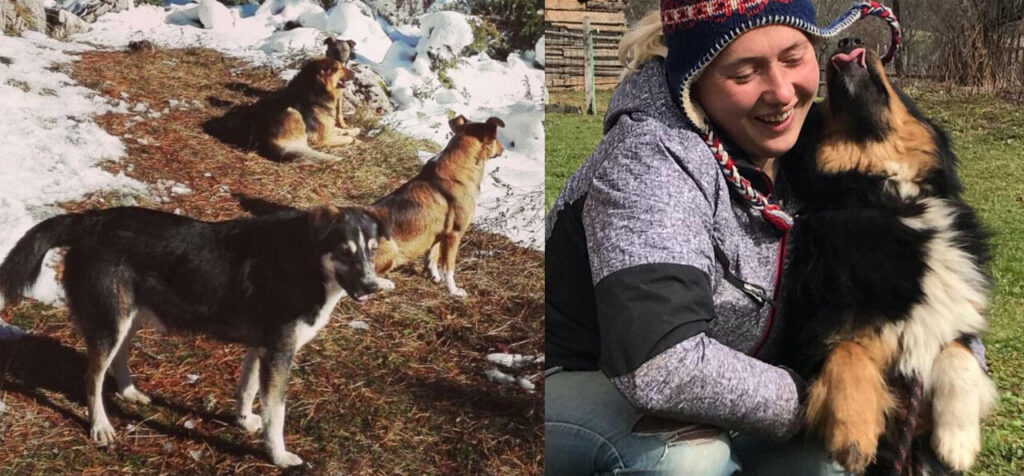 Nadia and her rescued dogs.