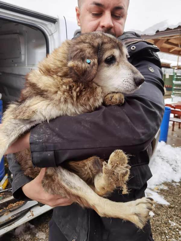 Romanian old rescue dog being held by the rescuer.