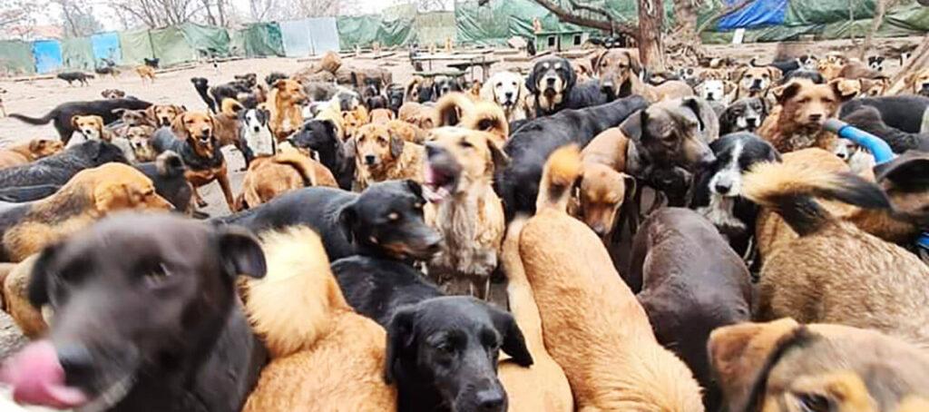 Sasha's rescued dogs