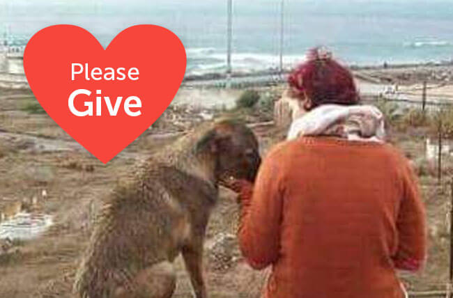 Please Give to Moroccan Animal Rescue Heroes