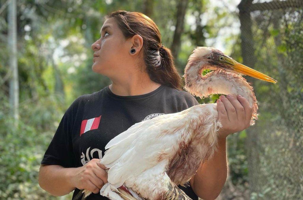 Rescuer with wild injured bird