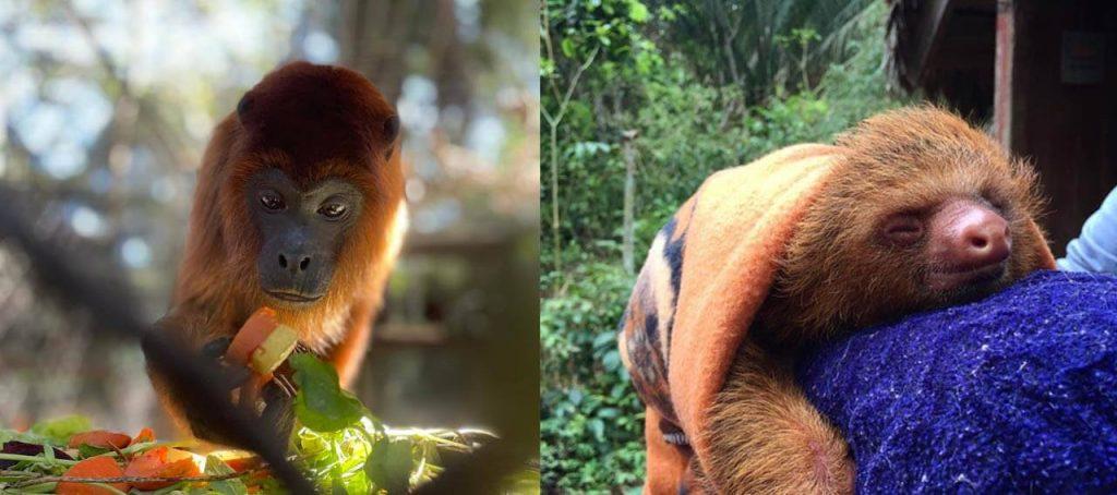 Amazon rescue shelter, monkey and sloth
