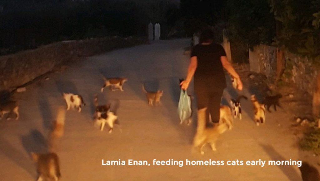 Lamia Enan, feeding homeless cats early morning