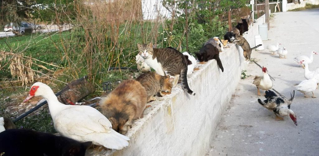 Feeding street cats and ducks in Greece.