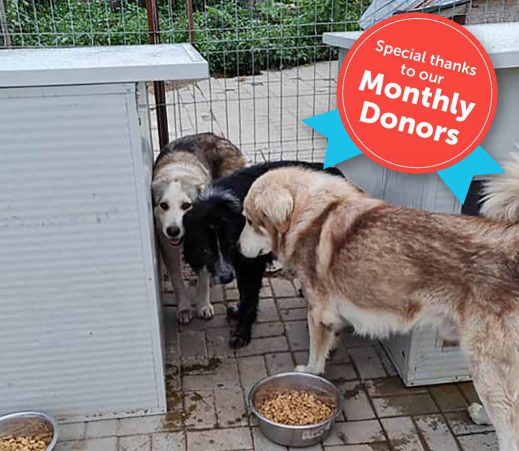 Rescue dogs in romania. Special thanks to our monthly donors!