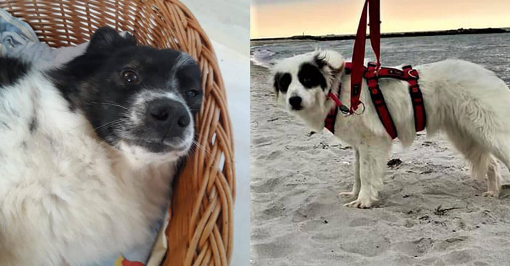 Happy ending for Romanian rescue dog!