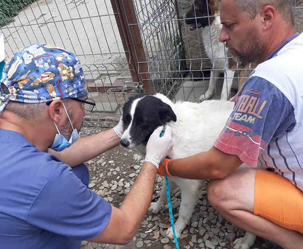Veterinarian taking care of rescue dog in Romania