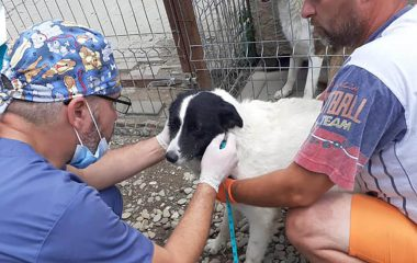 We Seized 30 More Dogs in Romanian Rescue Mission