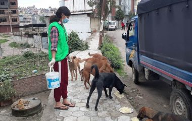 Care for Street Dogs in Nepal