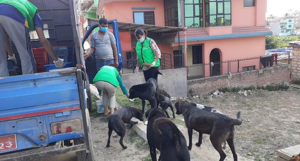 Rescuers feeding street dogs in Nepal.