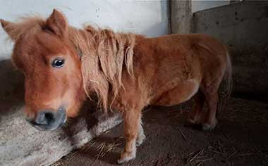 2nd pony that are in need of rescue