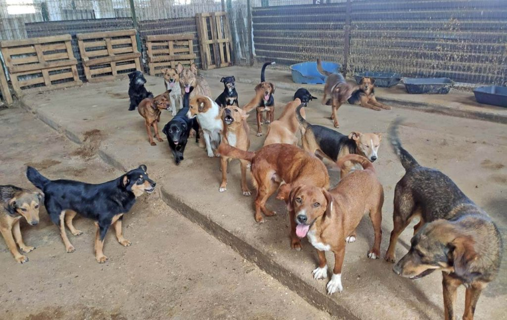 Bark ark dogs