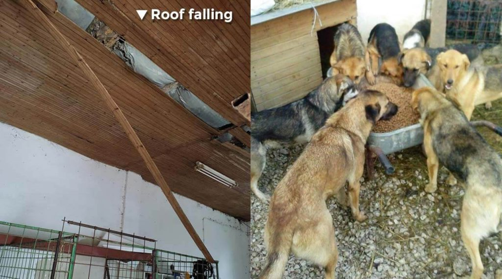 Roof failing, feeding rescue dogs