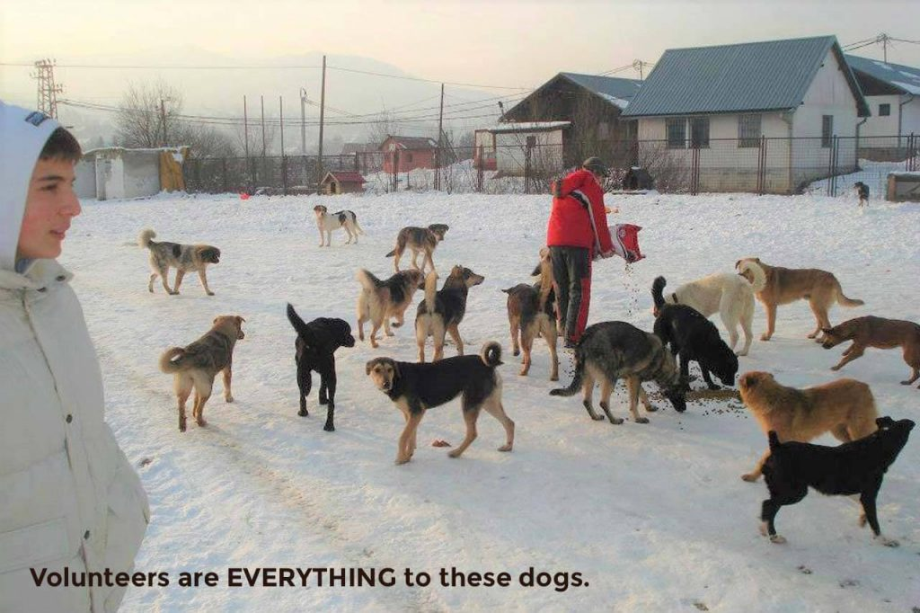 Bosnia, volunteers are everything to these dogs.