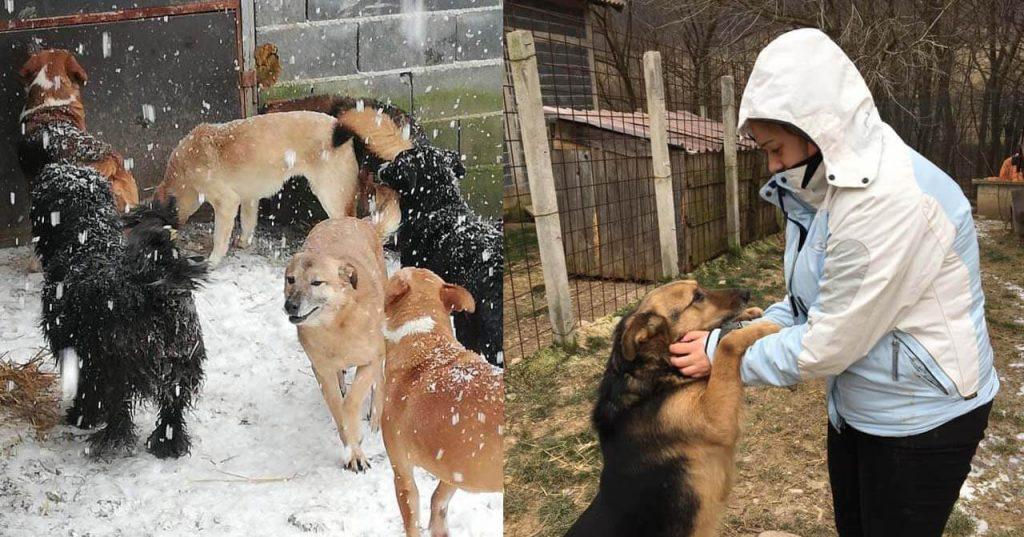 Dalida Kozlic taking care of her rescue dogs