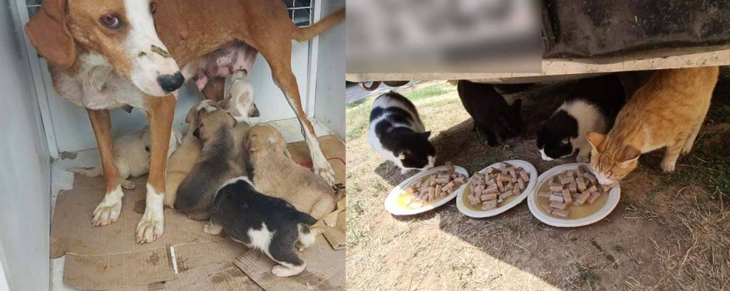 Edina Pasic's rescue dogs and cats