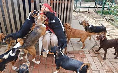 Happy rescue dogs